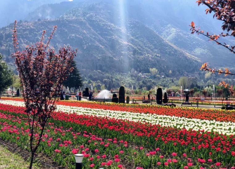 Tulip Garden, Jammu and Kashmir