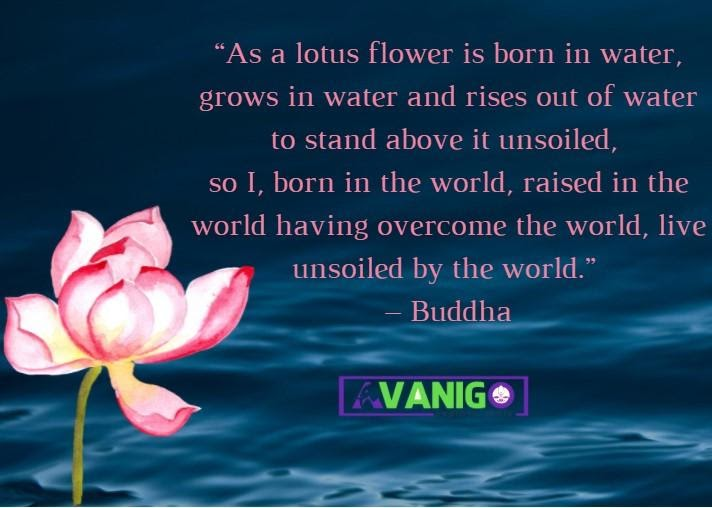 Quotes on Lotus Flower
