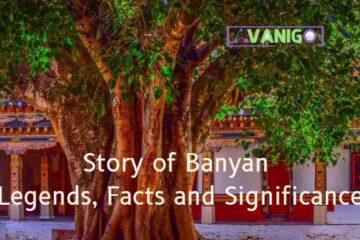 National Tree of India Banyan