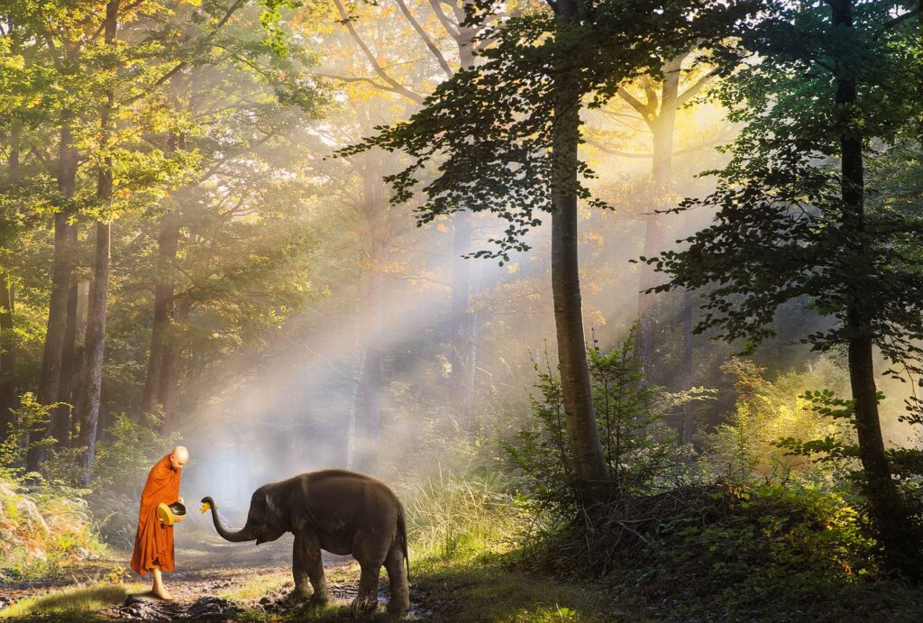 Buddhist and elephant