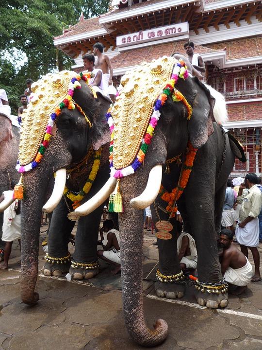 Kerala elephants